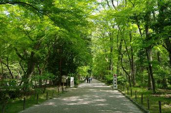 10糺の森1.jpg