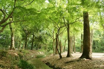 10糺の森2.jpg