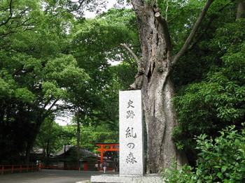 10糺の森3.jpg