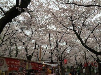 2平野神社 (1).JPG