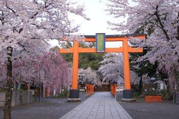 2平野神社 (2).jpg