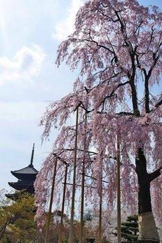 4東寺 (2).jpg