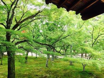 4東福寺 (1).JPG