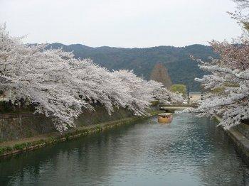 5琵琶湖疎水 (1).jpg