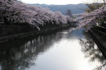 5琵琶湖疎水 (2).jpg