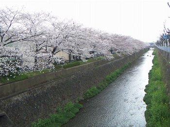 6天神川(1).jpg