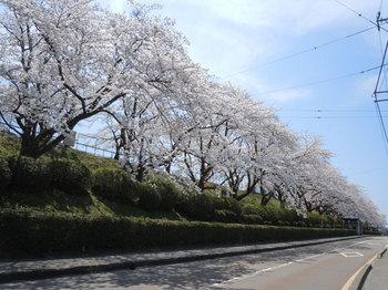 小丸山公園(2).jpg