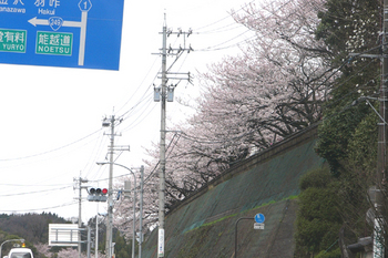 小丸山公園(3).jpg