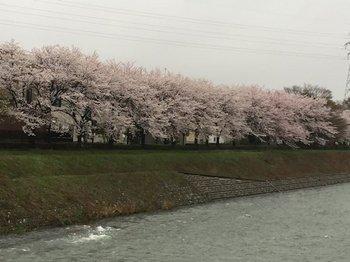 浅野川2.JPG